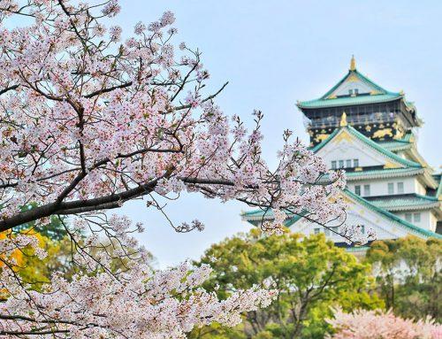 בדמיוני חלמתי על שדות של נבטוטים – יפן יומן מסע